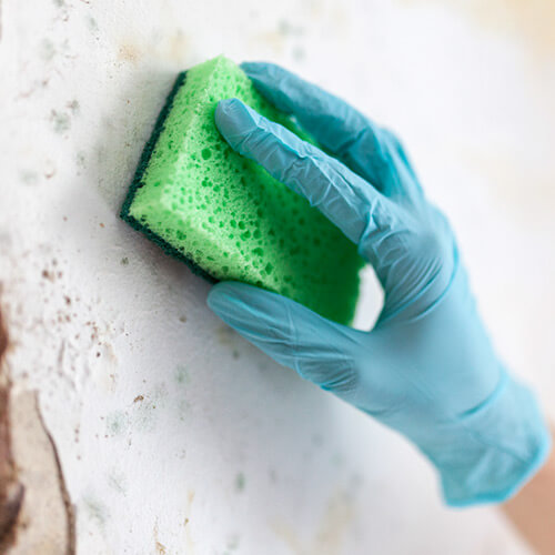 How To Remove Mildew On A Painted Wall